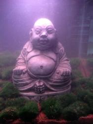 Inspiración Budha