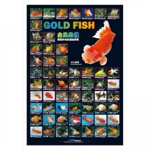 Póster Goldfish
