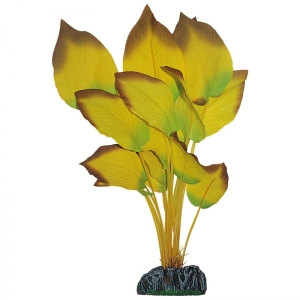 Planta S.anubia Amarilla 11