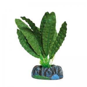 Planta S.aponogetón Verde
