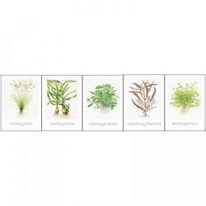 "Postales Set Tropica ""cyperus Helferi"""