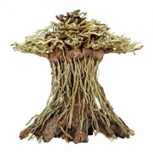 Bonsái Mushroom M