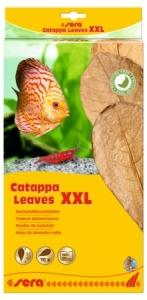 Sera Catappa Leaves XXL