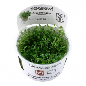 Glossostigma Elatinoides 1-2 Grow !