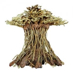 Bonsái Mushroom L